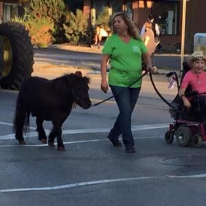 Gunner Pony being led